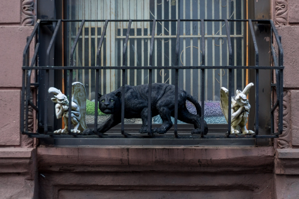 Animali a New York (1 of 7)